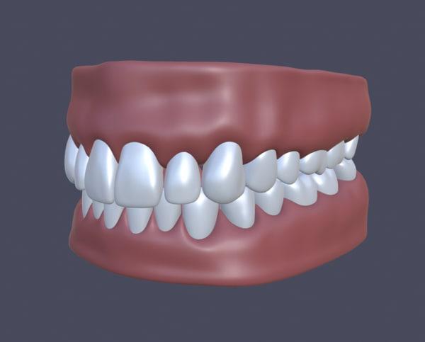3d jaw teeth gums model