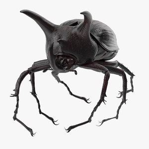 rhinoceros beetle pose 03 3d model