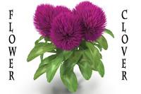 clover flower 3d model