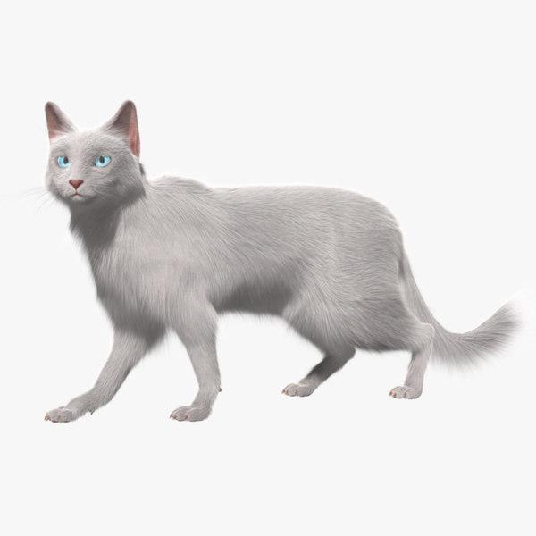 turkish angora white cat 3d obj