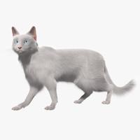 Turkish Angora White Cat