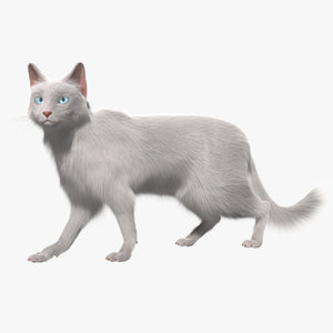 turkish angora white cat 3d obj