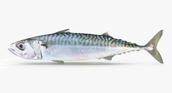 3d model mackerel