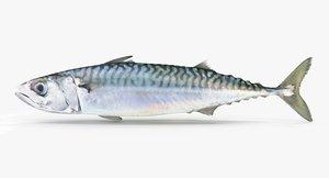 3d model mackerel