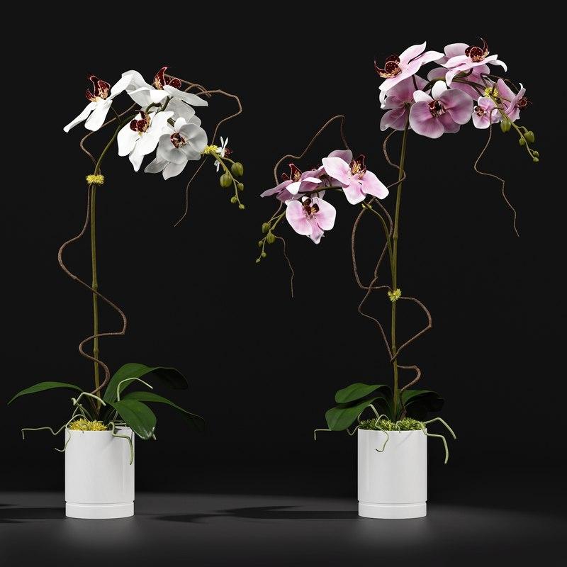 3d orchid