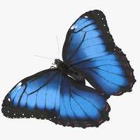 Blue Morpho Butterfly Wings Open Pose 01