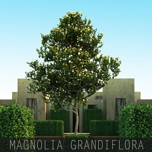 max 5 tree