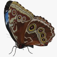 3d model blue morpho butterfly wings