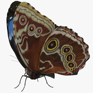 3d model blue morpho butterfly wings