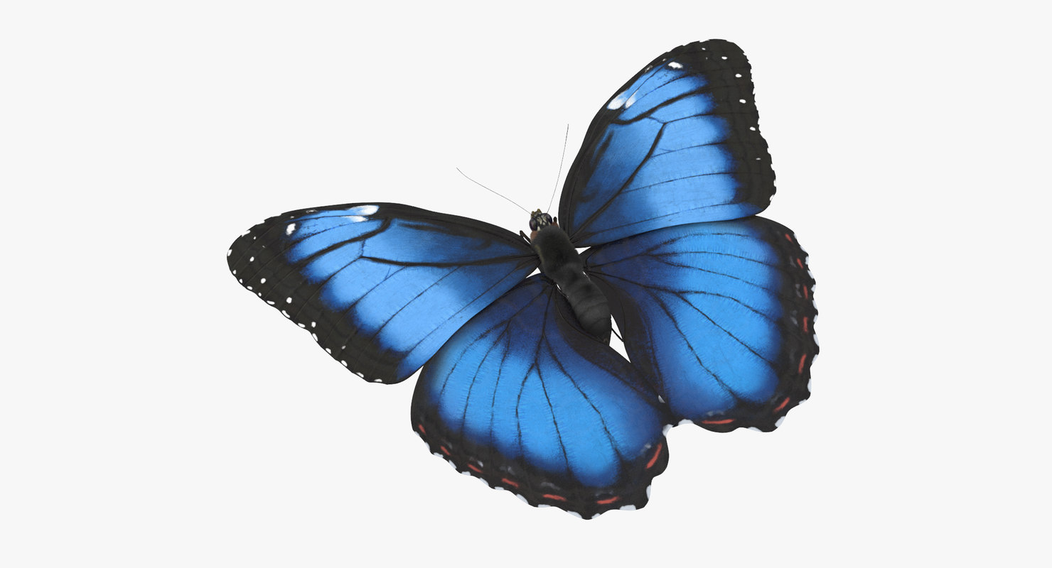 blue morpho butterfly flying 3d model