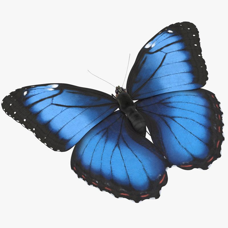 blue morpho butterfly flying 3d model