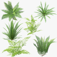 Ferns Collection