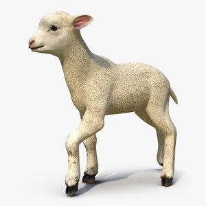 lamb pose 2 3d model