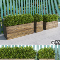 Hedges in wooden planters