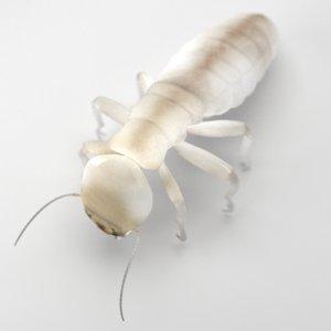 3d obj dampwood termite worker
