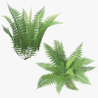 3d model ferns 01
