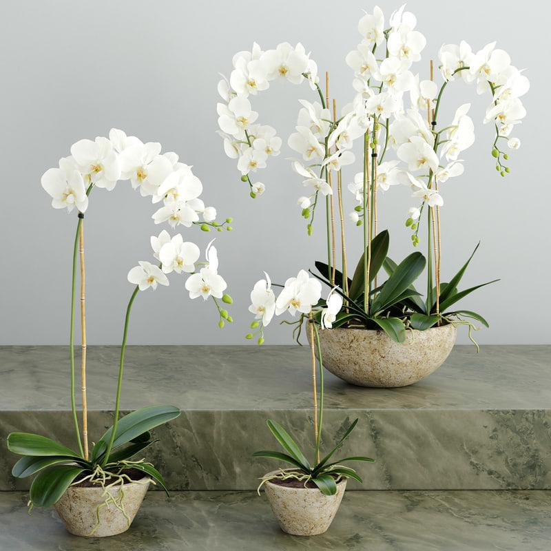 3d orchids flower