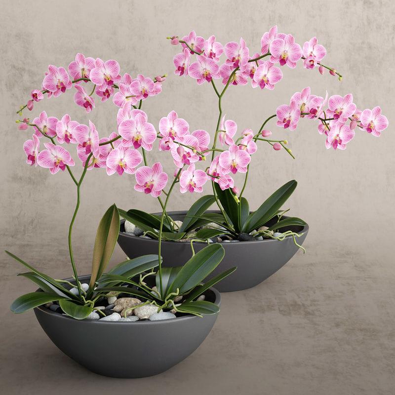 flower obj
