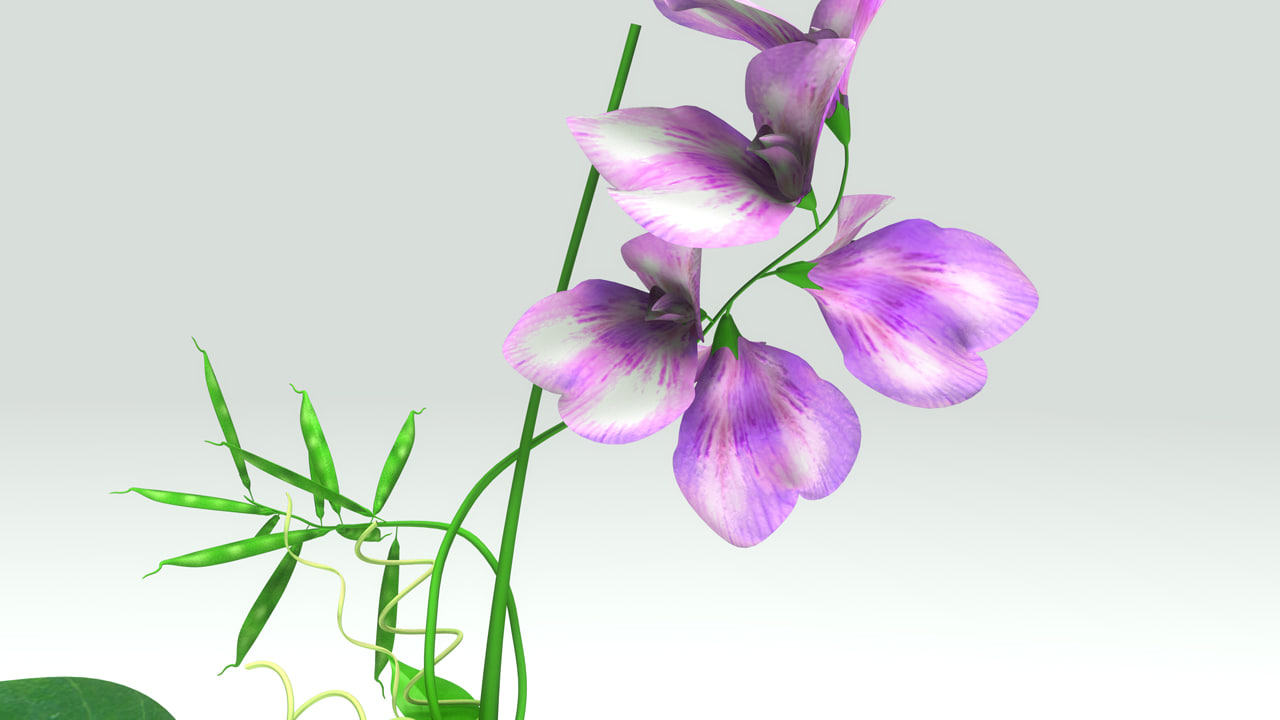 flowering plants obj
