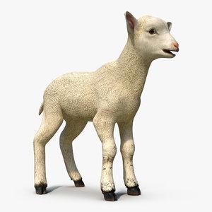 lamb 3d max