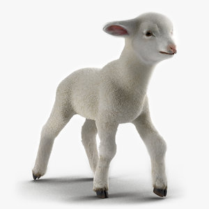 3d lamb rigged fur