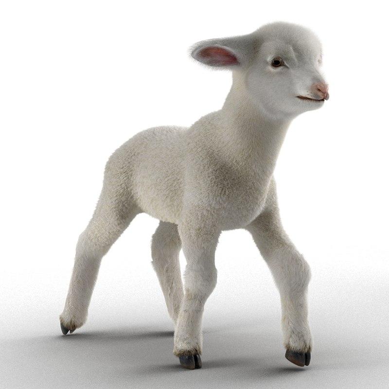 3d lamb rigged fur