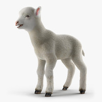 Lamb with Fur 3D Model