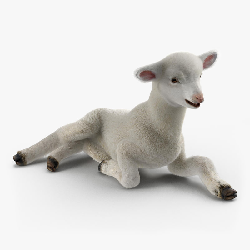 Lamb with Fur vray 3d model 00.jpg