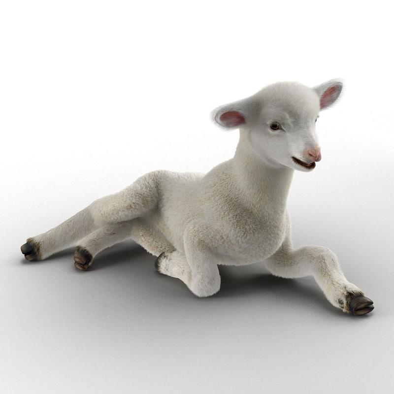 3d model lamb pose 4 fur
