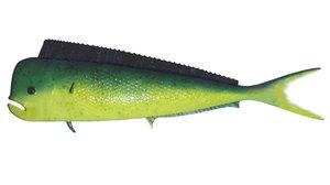 3d mahi-mahi fish