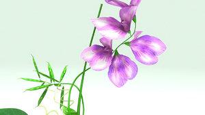 3d model lathyrus flowering
