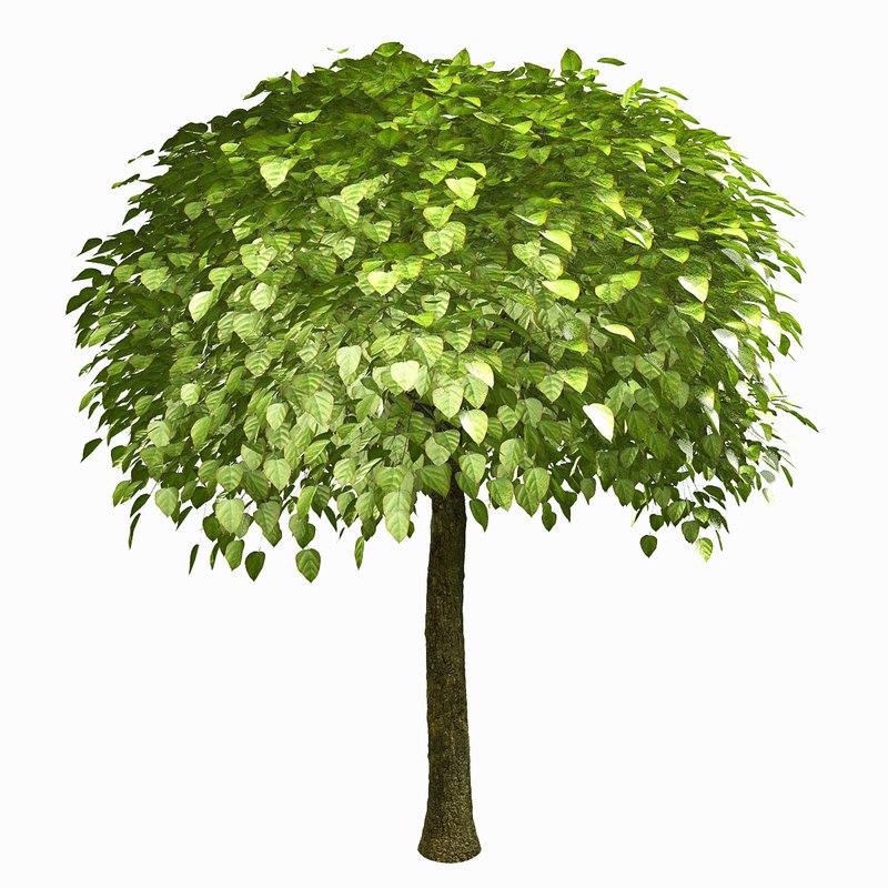 3d tree environment model