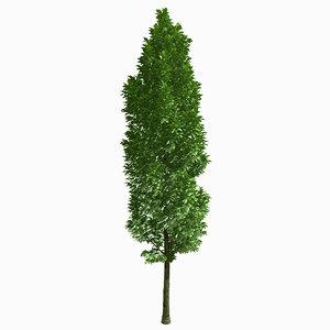 3d model of tree environment