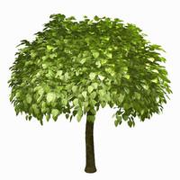 tree environment 3d obj