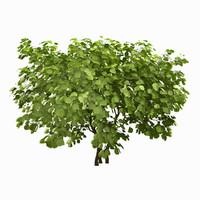 tree environment 3d model