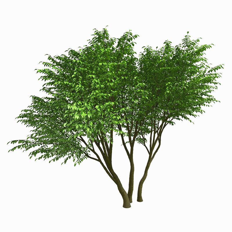 3d model tree environment