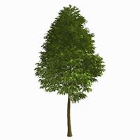 obj tree environment