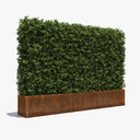Boxwood 3D models