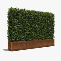 boxwood plants hedges rusted steel max