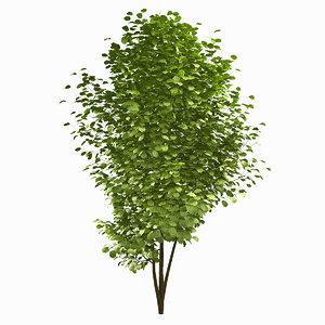 tree environment 3d fbx