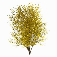 tree environment obj