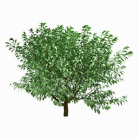 x tree environment