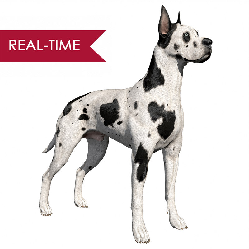 great dane real-time dog 3d ma