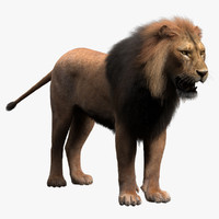 3d model of lion fur