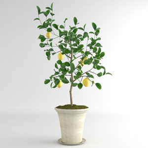 lemon fruit max