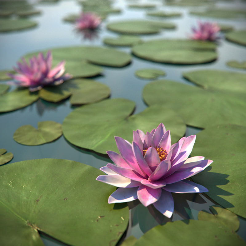 water lily max