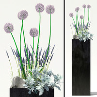 max garden flowers alliums dusty