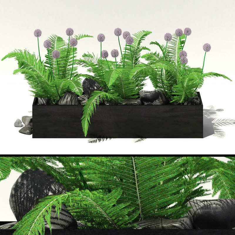 garden flowers alliums fern 3d model