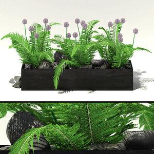 garden flowers alliums fern 3d model