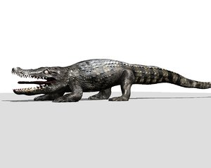 crocodile lwo